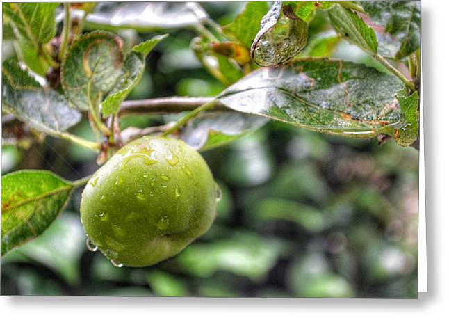Apple In Rain Greeting Card by Isabella Abbie Shores