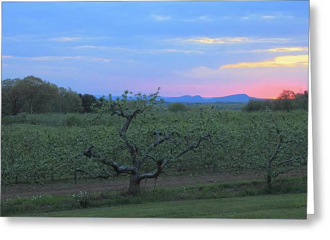 Apple Orchard And Holyoke Range At Sunset Greeting Card by John Burk