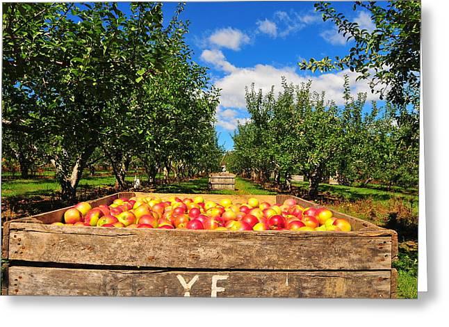 Pancake Greeting Cards - Apple Picking Season Greeting Card by Catherine Reusch  Daley