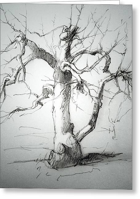 Apple Tree Greeting Card by H James Hoff