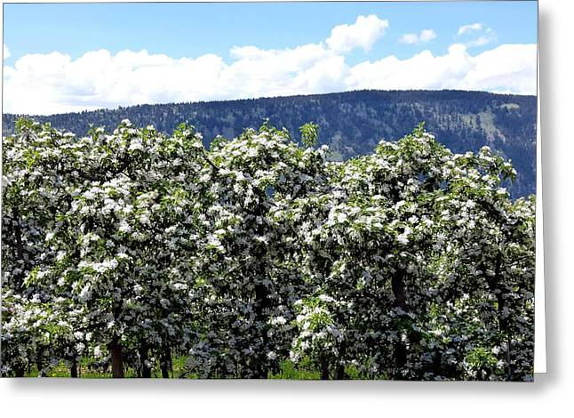 Apple Trees In Bloom     Greeting Card by Will Borden