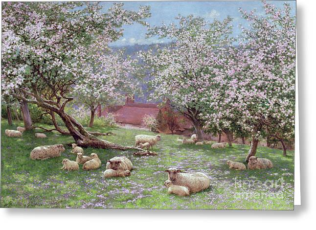 Sheep Greeting Cards - Appleblossom Greeting Card by William Biscombe Gardner