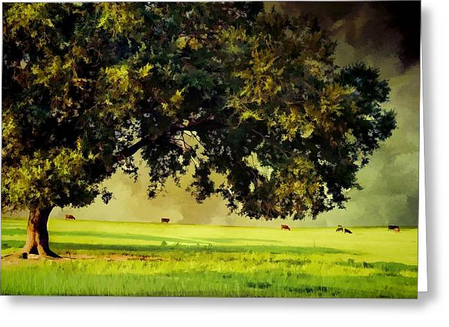 Rural Florida Greeting Cards - Approaching Summer Storm Greeting Card by Jan Amiss Photography