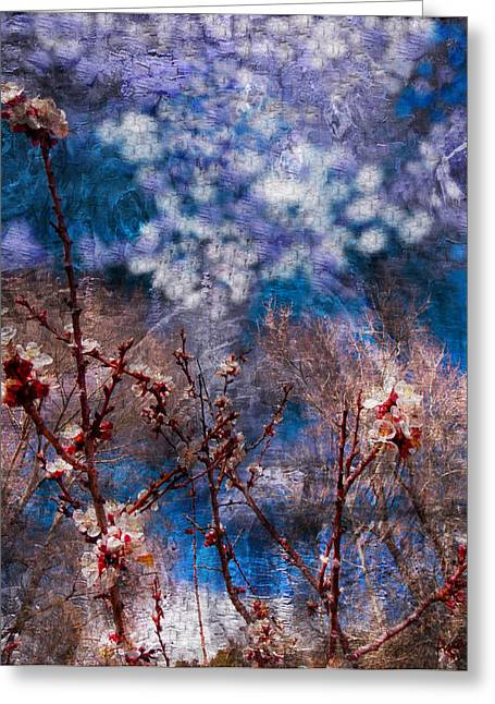 Apricot Digital Art Greeting Cards - Apricot Blossoms El Valle III Greeting Card by Anastasia  Ealy