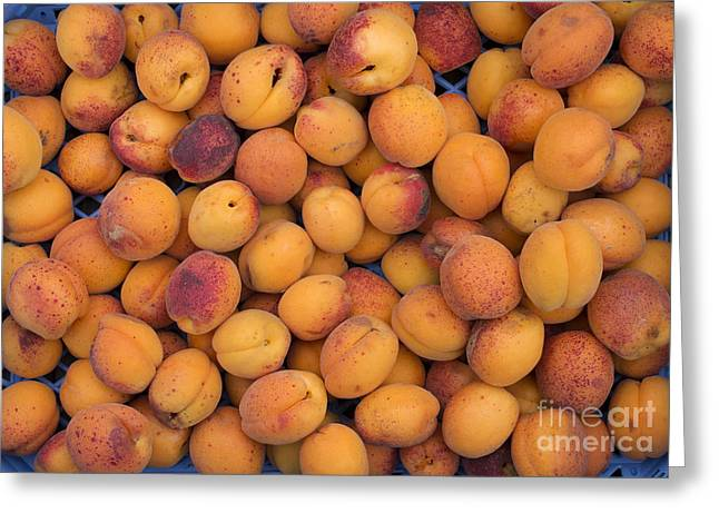 Apricot Moorpark Harvest Greeting Card by Tim Gainey