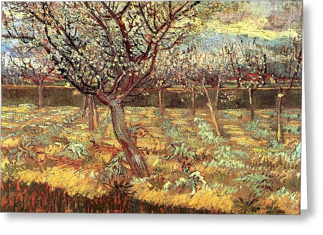 Apricot Trees In Blossom Greeting Card by Vincent van Gogh