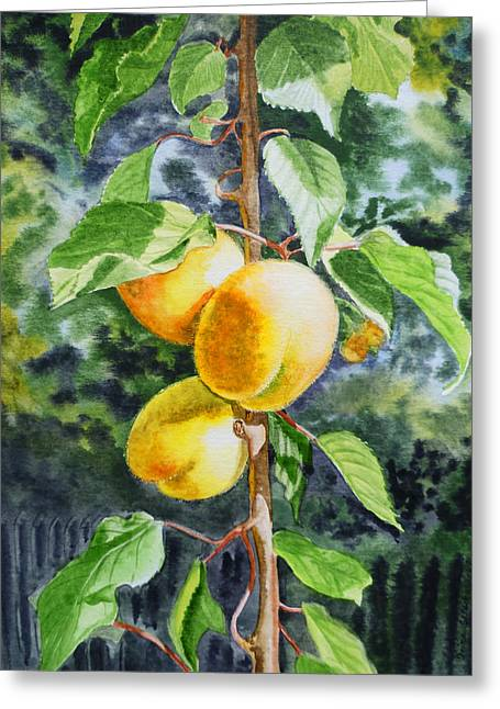 Apricots Paintings Greeting Cards - Apricots in the Garden Greeting Card by Irina Sztukowski