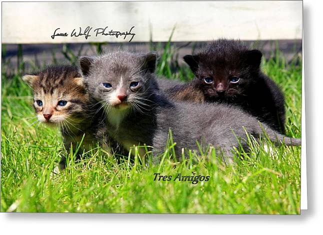 Litter Mates Greeting Cards - April     Tres Amigos Greeting Card by Mark Dakin