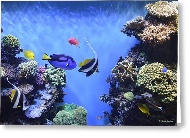 Aquarium Fish Digital Greeting Cards - Aquarium 2 Greeting Card by Barbara Snyder