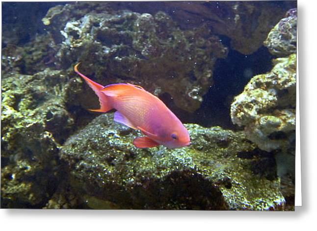 Aquarium Fish Greeting Cards - Aquarium 29 Greeting Card by Joyce StJames