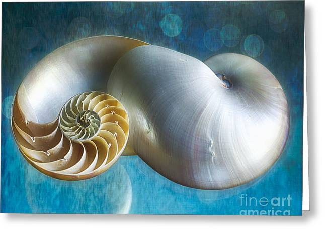 Aquatic Greeting Cards - Aquatic Dreams II Greeting Card by George Oze