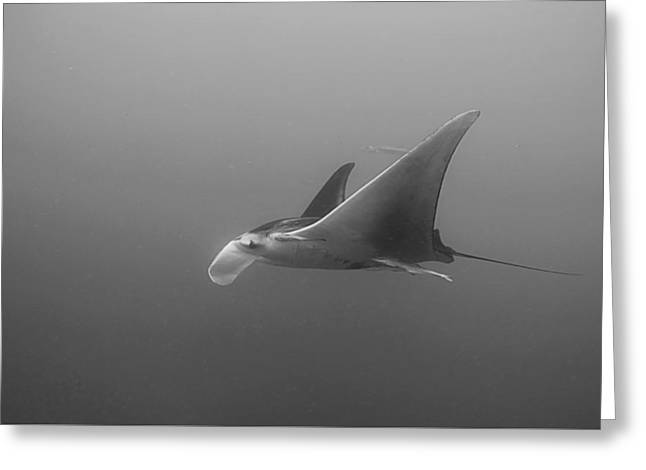 Sea Animals Greeting Cards - Aquatic Flight Greeting Card by Joe Quinn