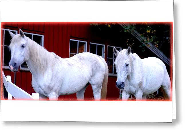 Arab Horses At Home, Behind Their Fence   Greeting Card by Hilde Widerberg