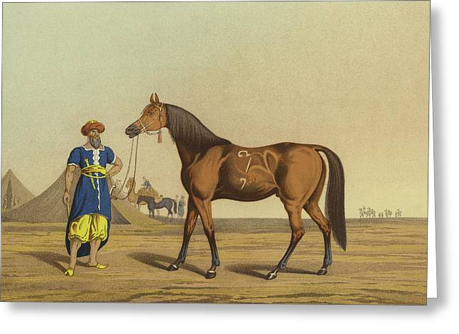 Arabian Horse Greeting Card by Henry Thomas Alken