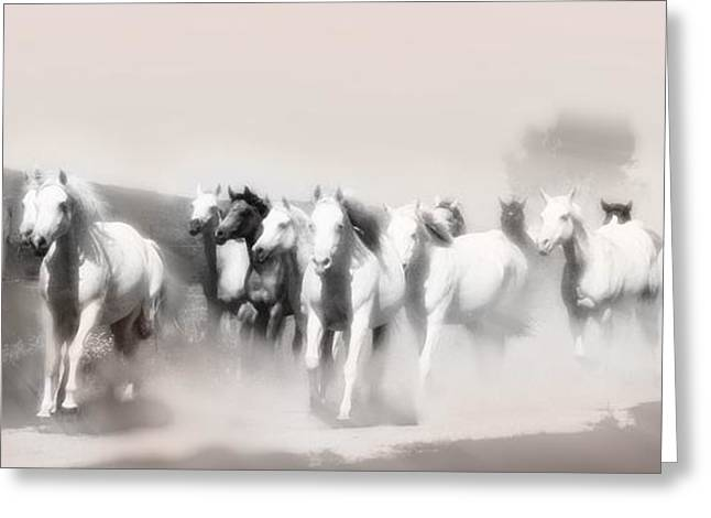 White Horses Photographs Posters Greeting Cards - Arabian mares - home run  Greeting Card by El Luwanaya Arabians