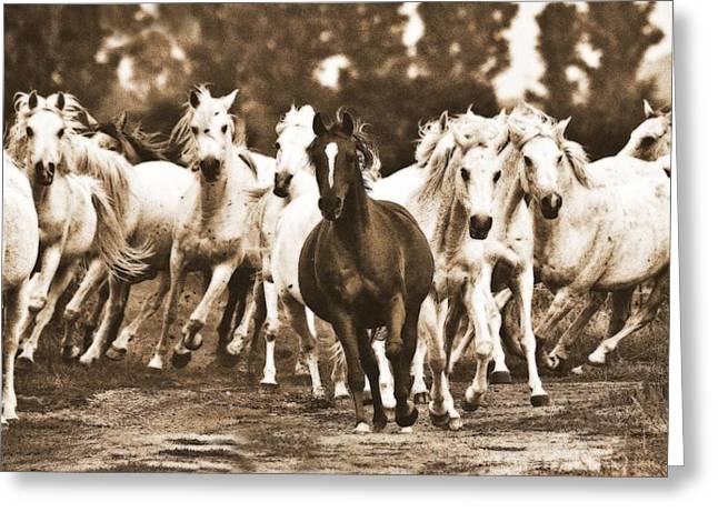 White Horses Photographs Posters Greeting Cards - Arabian mares - running home Greeting Card by El Luwanaya Arabians