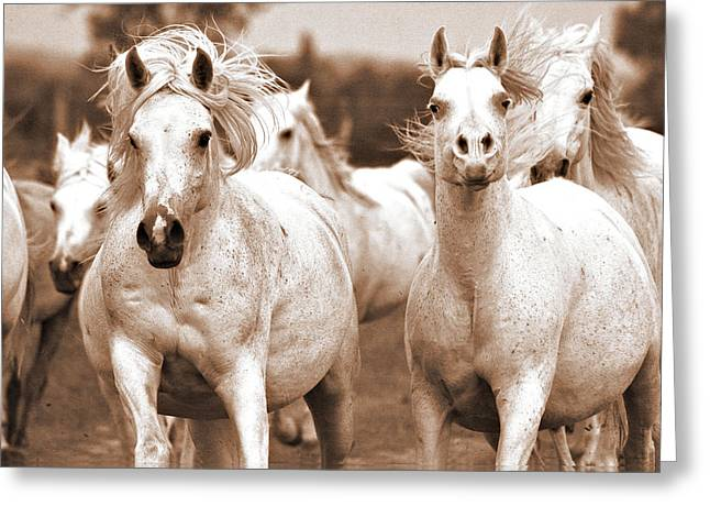 White Horses Photographs Posters Greeting Cards - Arabian mares home run Greeting Card by El Luwanaya Arabians