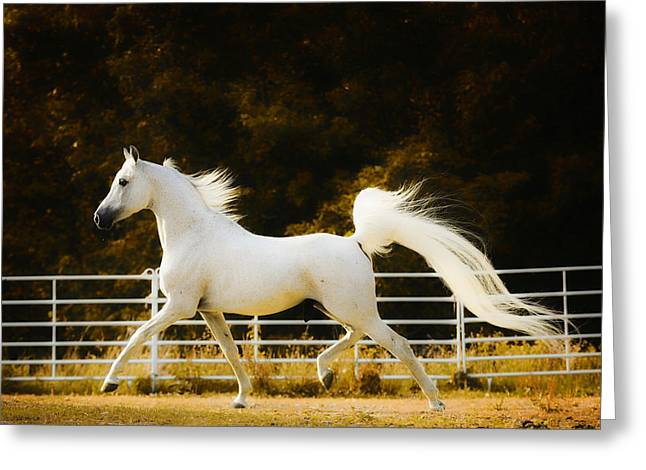 Ron Mcginnis Photography Greeting Cards - Arabian Prince Greeting Card by Ron  McGinnis