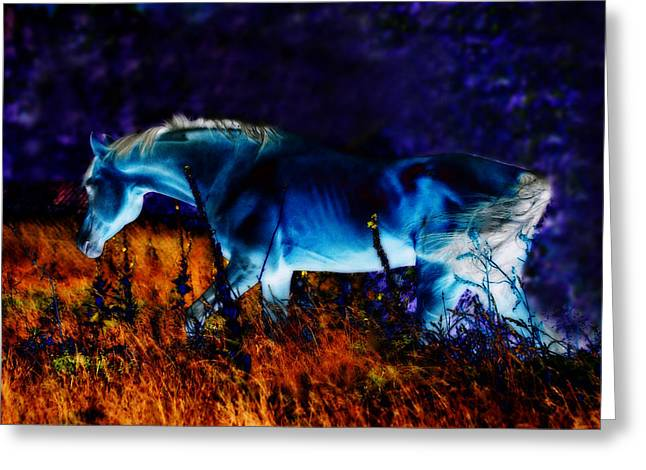 Horse Art Pastels Greeting Cards - Arabian stallion Greeting Card by ELA-EquusArt