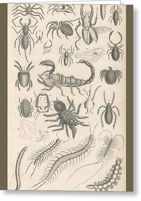Stinger Greeting Cards - Arachnides. Myriapoda Greeting Card by Captn Brown