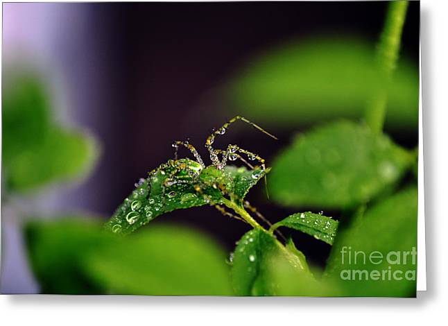 Arachnishower Greeting Card by Clayton Bruster