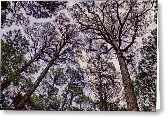 Original Photographs Greeting Cards - Arbor Day Greeting Card by Gary Migues