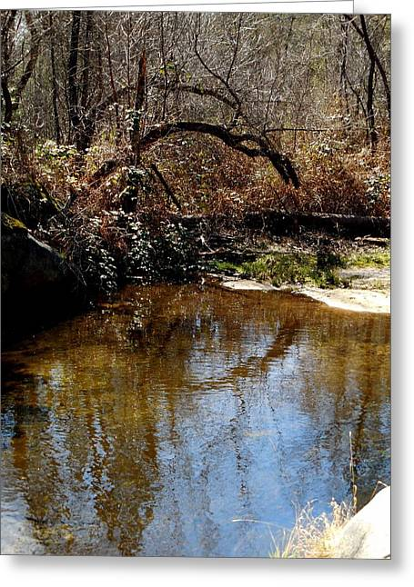 Trees Reflecting In Creek Greeting Cards - Arch Tree Reflects Greeting Card by Chris Gudger