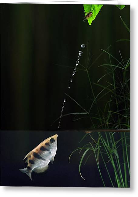 Archerfish Greeting Card by Scott  Linstead