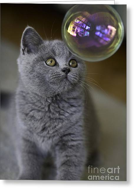 Cute Cat Greeting Cards - Archie with bubble Greeting Card by Sheila Smart