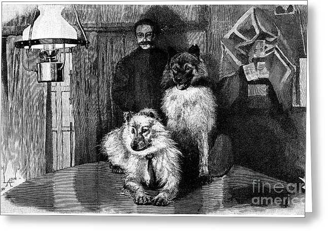 Frederick Greeting Cards - Arctic Explorer And Dogs, 19th Century Greeting Card by Spl