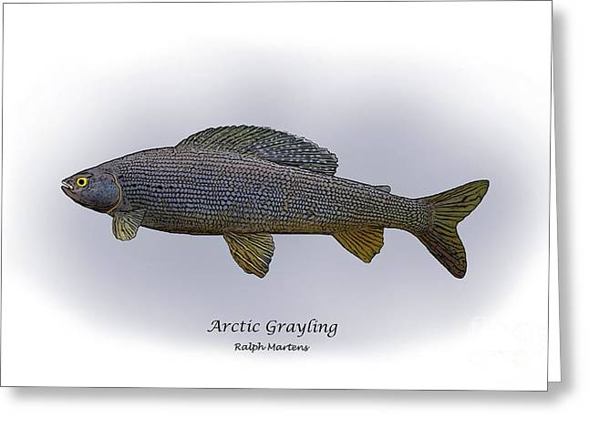 Arctic Grayling Greeting Card by Ralph Martens