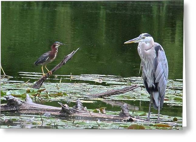 Bird Summit Greeting Cards - Are We Related Greeting Card by Robin Erisman