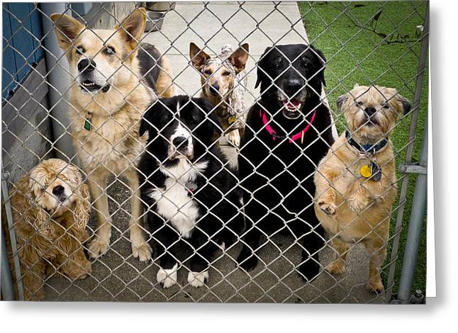 Doggies Greeting Cards - Are You Here For Me Greeting Card by Joan McDaniel