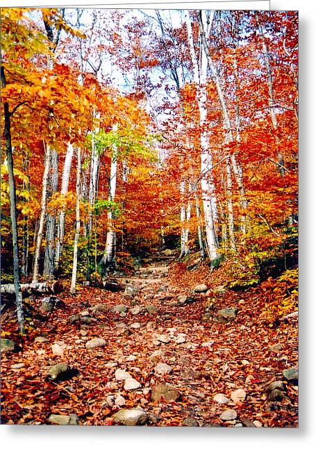 New Hampshire Leaves Greeting Cards - Arethusa Falls Trail Greeting Card by Greg Fortier