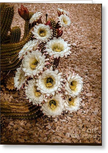 Bloomers Greeting Cards - Argentine Giants Greeting Card by Robert Bales