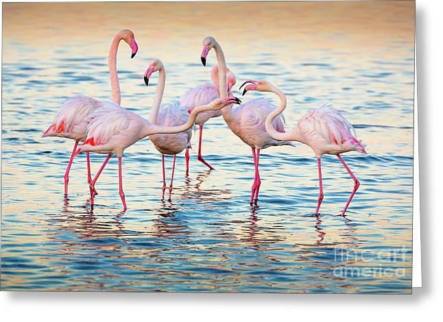 Arguing Flamingos Greeting Card by Inge Johnsson