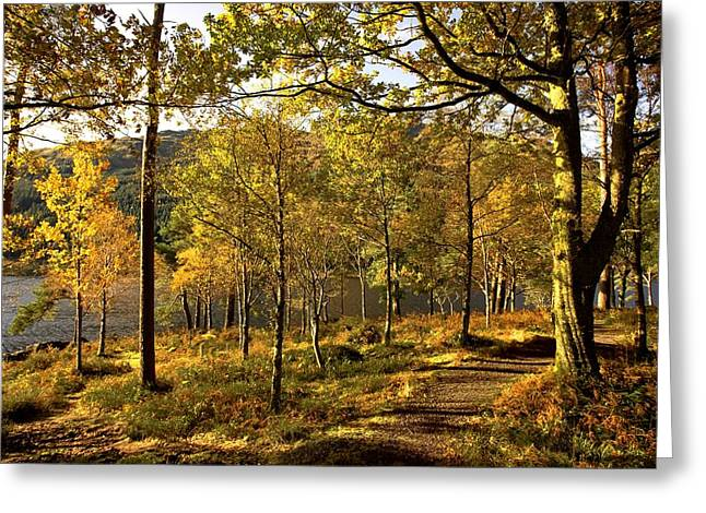 Bute Greeting Cards - Argyll And Bute, Scotland Path Through Greeting Card by John Short
