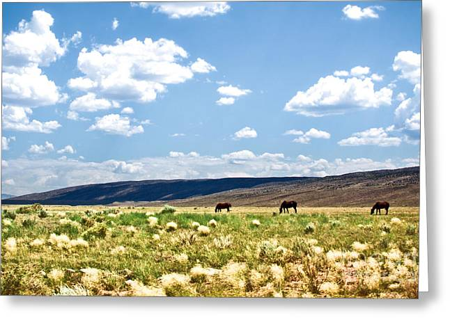 Arizona Desert Horses Greeting Card by Ryan Kelly