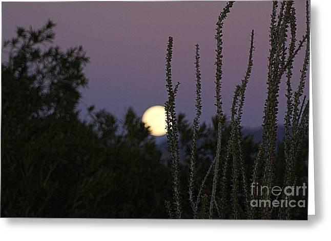 Landscape Framed Prints Greeting Cards - Arizona Moon Greeting Card by Joanna Thompson