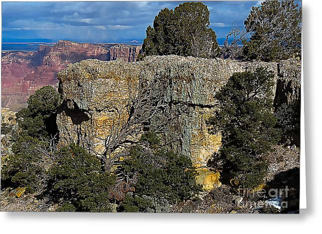 Recently Sold -  - Ledge Greeting Cards - Arizona Shoreline Greeting Card by Mim White