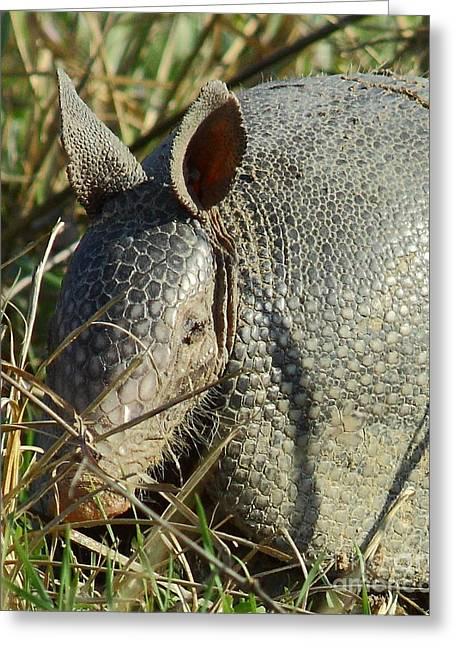 Armadillo By Morning Greeting Card by Robert Frederick
