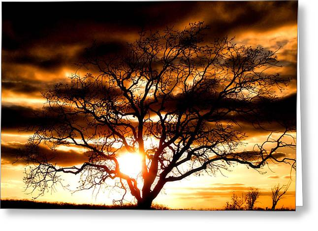 Fantasy Tree Art Greeting Cards - Arms Wide Open Greeting Card by Karen M Scovill