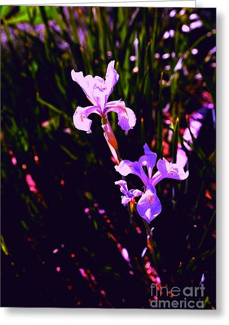 San Francisco Bay Greeting Cards - Aroma Greeting Card by PlusO FineArt