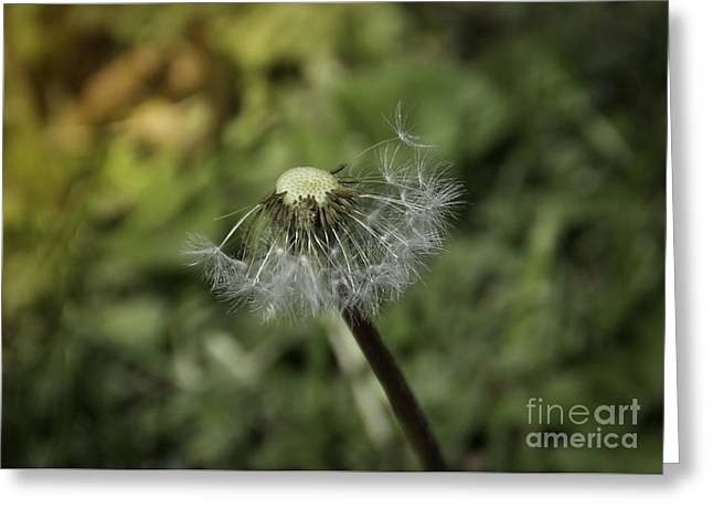 Close Focus Nature Scene Greeting Cards - Art in Nature Greeting Card by Janice Rae Pariza