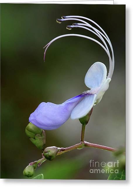 Art In Nature Greeting Card by Sabrina L Ryan