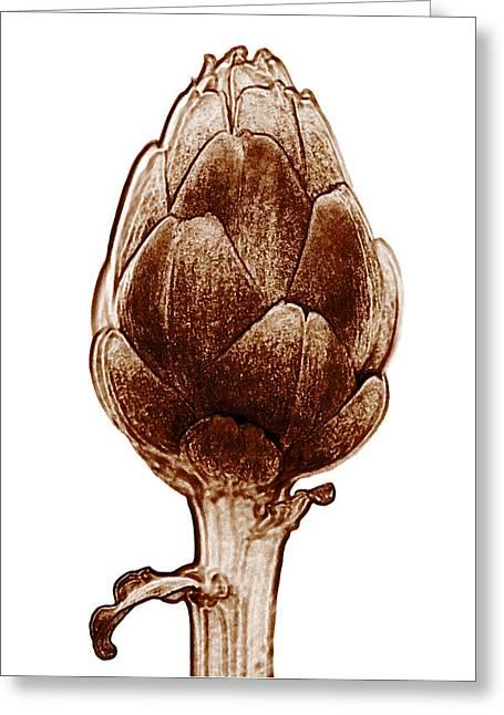 Cuisine Art Greeting Cards - Artichoke Greeting Card by Frank Tschakert