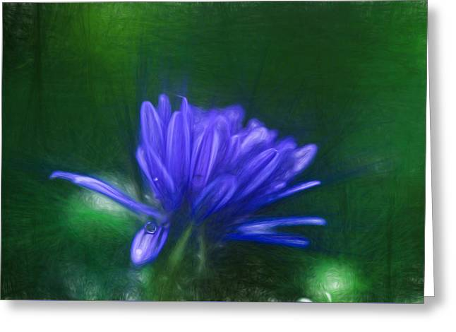 Sunlight On Flowers Greeting Cards - Artistic Blue Aster Greeting Card by Leif Sohlman