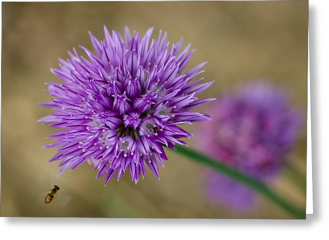 Flower Design Greeting Cards - Artistic Chives Greeting Card by William Sturgell