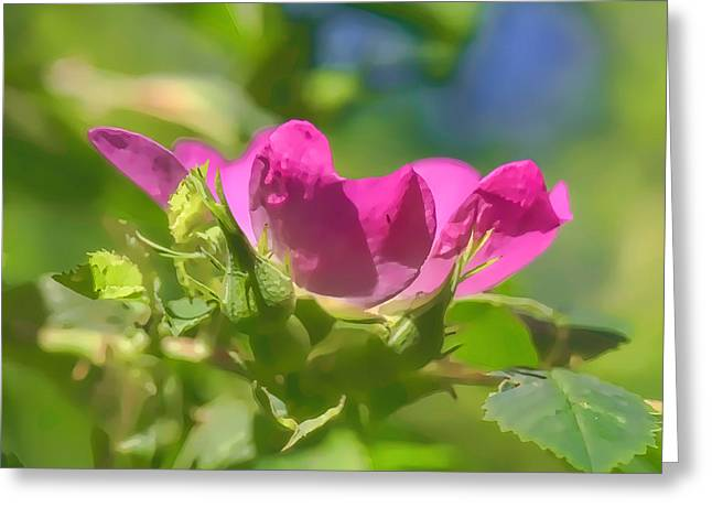 Rose Petals Greeting Cards - Artistic Dogrose 1 Greeting Card by Leif Sohlman