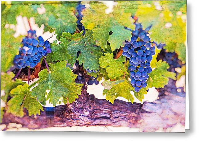Artistic Grape Vines Greeting Card by Garry Gay